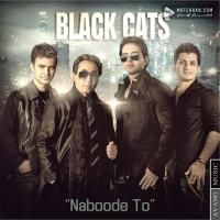 Black Cats Naboode To